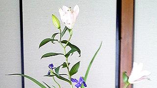 立花正風体